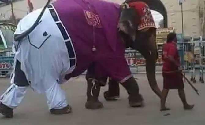 elephant-n